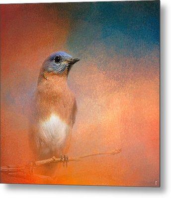 Summer Day Bluebird - Wildlife Metal Print by Jai Johnson