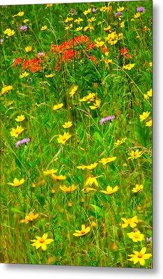 Summer Flowers On The Blue Ridge Parkway I Metal Print by Dan Carmichael