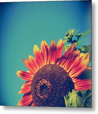 Summer Sunflower Metal Print by Joy StClaire