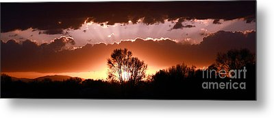 Summer Sunset Metal Print by Steven Reed
