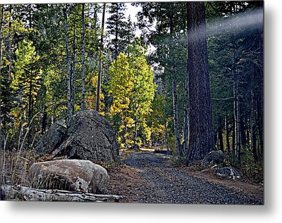 Sun Beam Metal Print by Lynn Bawden
