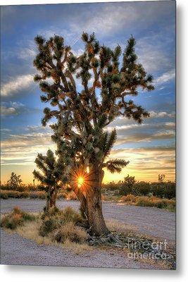 Sun Rays Through A Joshua Tree Metal Print by Eddie Yerkish