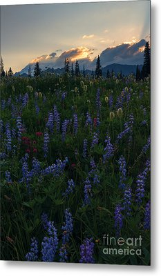 Sunbeams Over Rainier Metal Print by Mike  Dawson