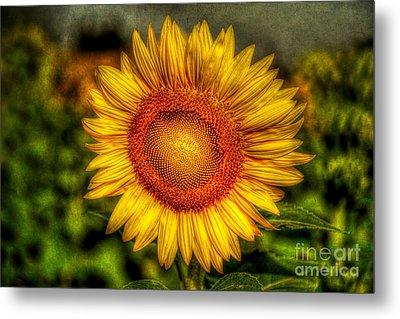 Sunflower Metal Print by Adrian Evans
