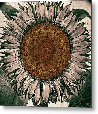 Sunflower - Face To The Sunshine Metal Print by Patricia Januszkiewicz