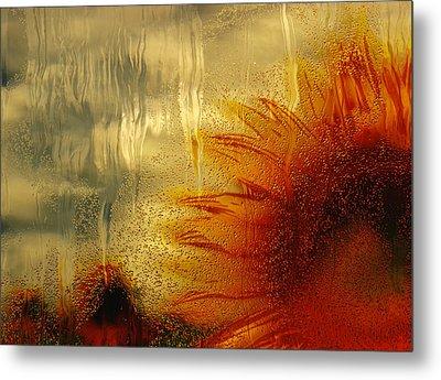 Sunflower In The Rain Metal Print by Jack Zulli