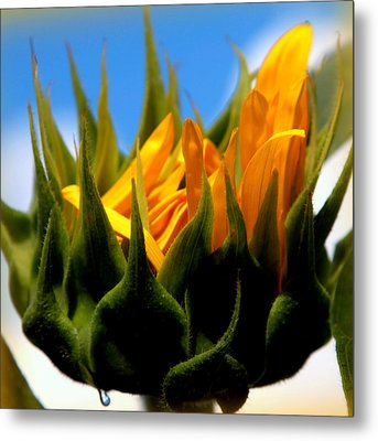 Sunflower Teardrop Metal Print by Karen Wiles