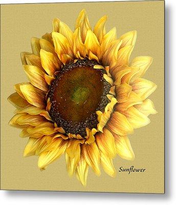 Sunflower Metal Print by Tom Romeo