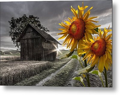 Sunflower Watch Metal Print by Debra and Dave Vanderlaan