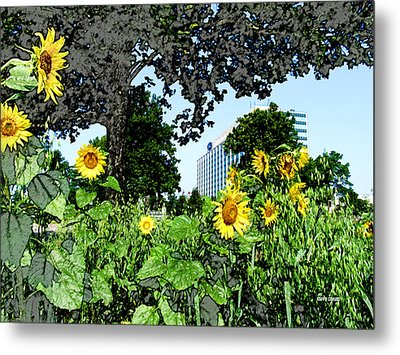 Sunflowers Outside Ford Motor Company Headquarters In Dearborn Michigan Metal Print by Design Turnpike