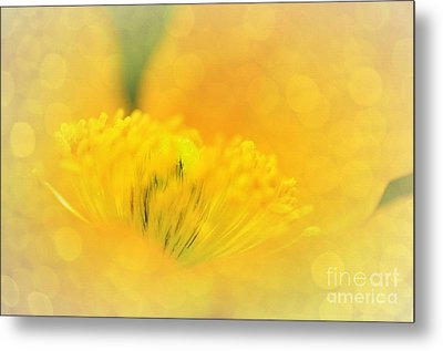Sunlight On Poppy Abstract Metal Print by Kaye Menner