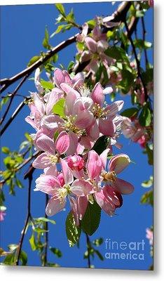 Sunlight On Spring Blossoms Metal Print by Carol Groenen