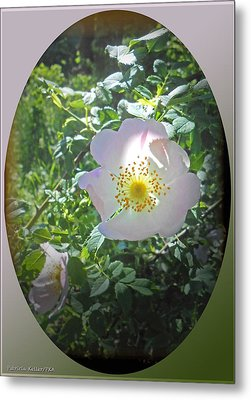 Sunlight On The Wild Pink Rose Metal Print by Patricia Keller