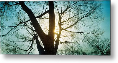 Sunlight Shining Through A Bare Tree Metal Print by Panoramic Images