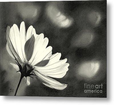 Sunlit Daisy Metal Print by Nicola Butt