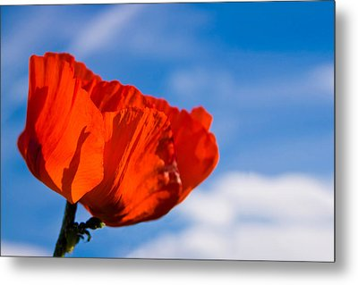 Sunlit Poppy Metal Print by Adam Romanowicz