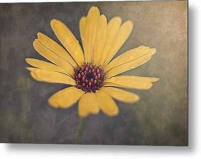 Sunny Metal Print by Faith Simbeck