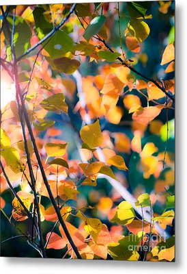 Sunny Yellow Leaves Metal Print by Sonja Quintero