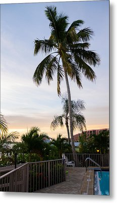 Sunrise Palms Metal Print by Margaret Pitcher