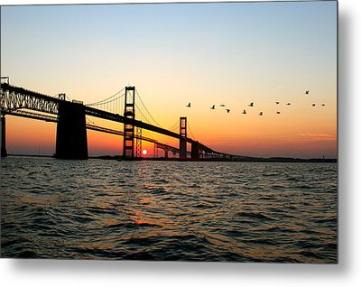 Sunset Flight Metal Print by Jennifer Casey