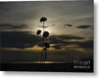 Sunset Flower Metal Print by Nicole Markmann Nelson