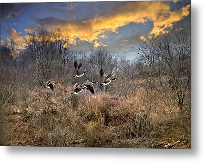 Sunset Geese Metal Print by Christina Rollo