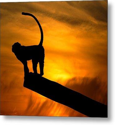 Monkey / Sunset Metal Print by Martin Newman
