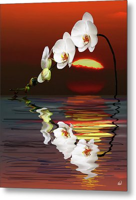 Sunset Orchids Metal Print by Angela A Stanton