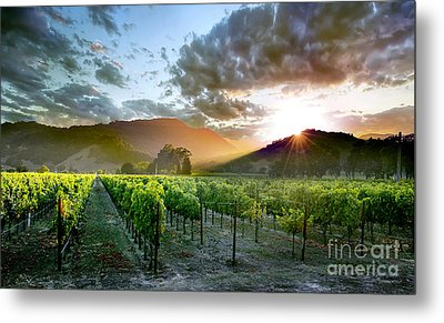 Wine Country Metal Print by Jon Neidert