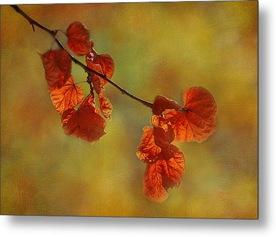 Sunshine And Red  Metal Print by Ivelina G