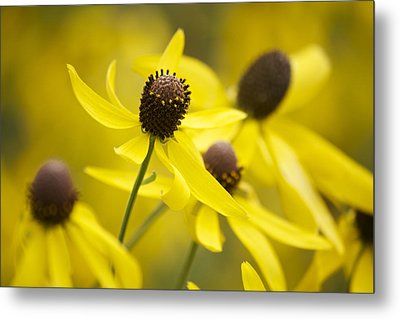 Sunshine On A Cloudy Day Metal Print by Penny Meyers
