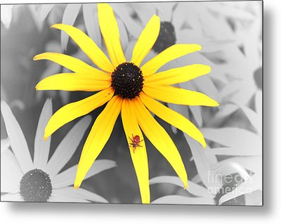 Sunshine Susie Metal Print by Cathy  Beharriell