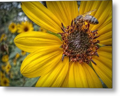 Supper Time Metal Print by Linda Unger