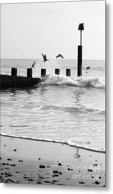 Surprised Seagulls Metal Print by Anne Gilbert