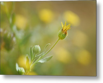 Surrounded Metal Print by Guido Montanes Castillo