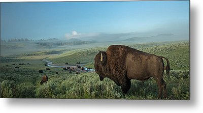 Surveying His Kingdom Metal Print by Sandy Sisti