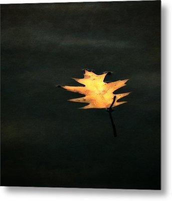 Suspended Metal Print by Michelle Calkins