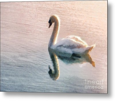 Swan On Lake Metal Print by Pixel  Chimp