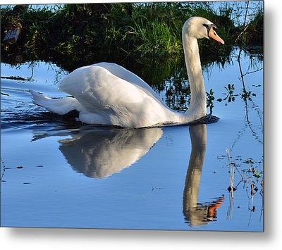 Swan Reflection Metal Print by Barry Goble