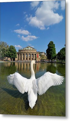 Swan Spreads Wings In Front Of State Theatre Stuttgart Germany Metal Print by Matthias Hauser