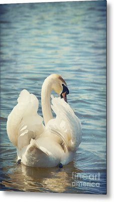 Swan Metal Print by Svetlana Sewell