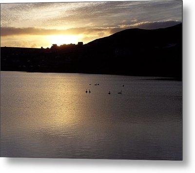Swans On Loch Metal Print by George Leask