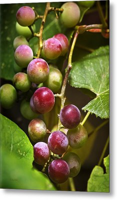 Sweet Grapes Metal Print by Christina Rollo