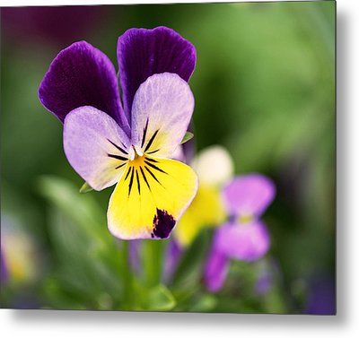 Sweet Violet Metal Print by Rona Black