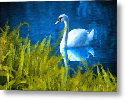 Swimming Swan And Ferns Metal Print by Kenny Francis