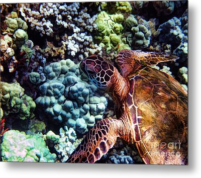 Swimming With A Sea Turtle Metal Print by Peggy J Hughes