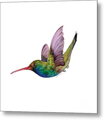 Swooping Broad Billed Hummingbird Metal Print by Amy Kirkpatrick