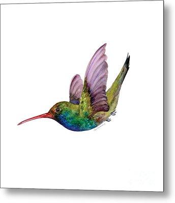 Swooping Broad Billed Hummingbird Metal Print by Amy Kirkpatrick