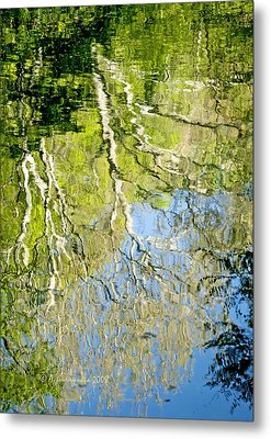 Metal Print featuring the photograph Sycamore Trees Reflected In A Stream by A Gurmankin