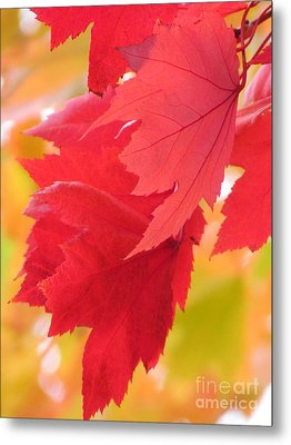 Symphony Of Autumn 22 Metal Print by France Laliberte